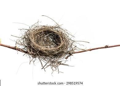 Lonely bird nest isolated on white background. Bird Nest.