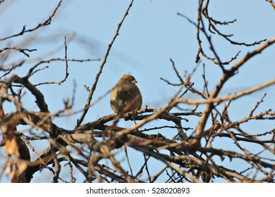 A lonely bird sitting on the branch of the tree in winter
