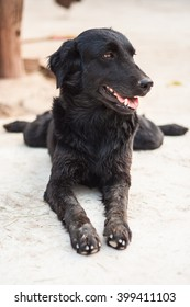 Lonely black dog with small eyes is laying and waiting someone on outdoors