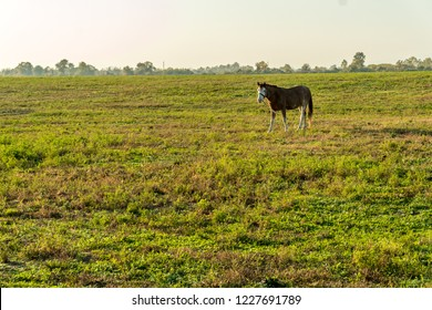 Lonely Brown horse on a meadow against distant horizon.
