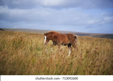 lonely brown pony