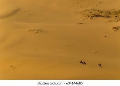 Lonely camel rider in the Gobi desert in mongolia