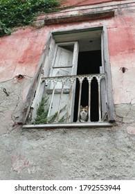 Lonely cat in broken window of abondoned house