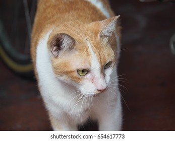 lonely cat seeing