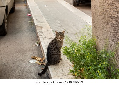 A lonely cat for the streets