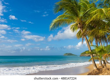 Lonely coconut palm tree on a Pearl beach near village of Deshaies, Guadeloupe, Caribbean