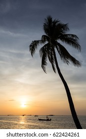lonely coconut tree on the beach with sunset