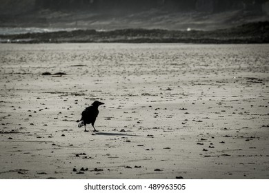 Lonely crow on a beach in black and white