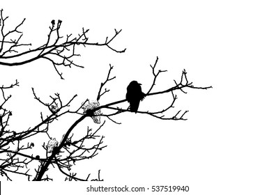 Lonely crow sitting on a tree branch in winter (isolated on white, linocut)