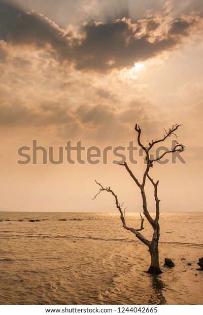 Lonely Dead Tree Stand By Sea Stock Photo (Edit Now) 1244042665