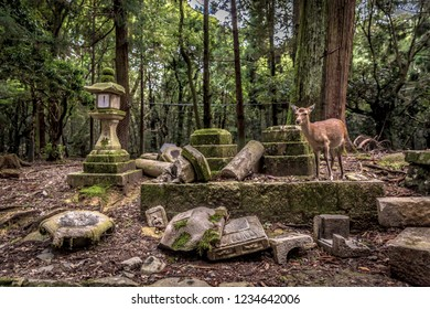 A lonely deer roaming in a temple surrounded by a florest in Nara in Japan
