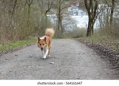 Lonely dog approaches towards the camera in the forest