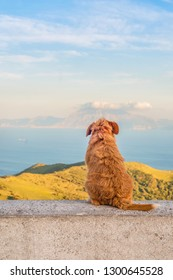 Lonely dog sitting turned backwards and watching on Gibraltar strait