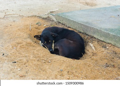 lonely dog  sleeping in sand hole. dog feeling cold in the morning.