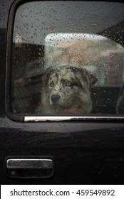 A lonely dog staring out the window of a black pickup truck waiting for its owner.