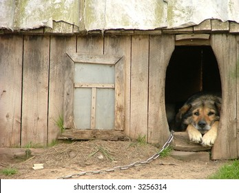 lonely dog watching out of his kennel