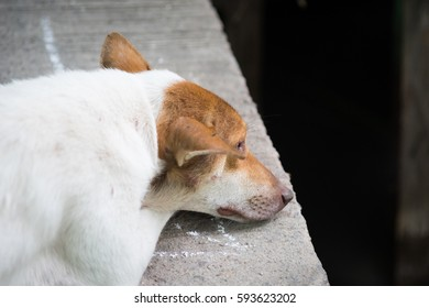 lonely dogs lying with sadness