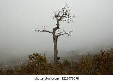 Lonely dried tree in the fall in the fog