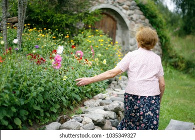 Lonely elderly woman wandering in the garden in summer touches asters. Happy elderly woman walking in the garden enjoying the retirement.