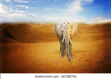 lonely elephant in a desert