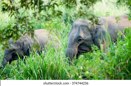 Lonely elephant in a jungle of Sri Lanka island