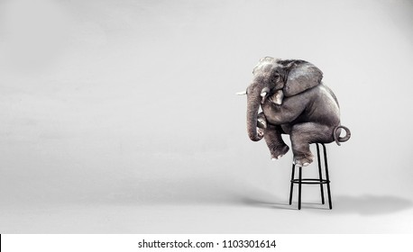 lonely elephant sitting in minimalist room