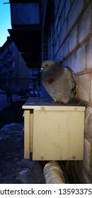 Lonely evening bird