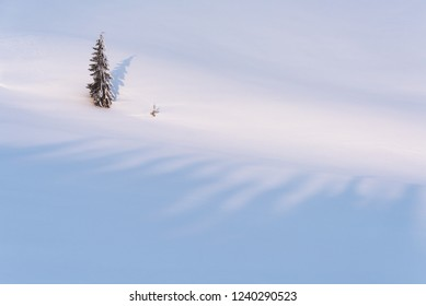 Lonely fir tree in the winter mountains. Snowy background with copy space for text