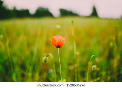 Lonely flower in the middle of a field