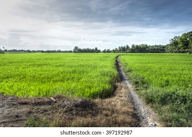 Lonely footpath in fresh field