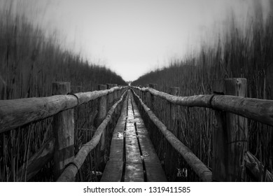 Lonely, gloomy, depressive and abandoned old wooden boards trail through the lake reeds to the horizon, Latvia, black and white image