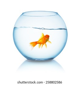 lonely goldfish in a fishbowl isolated on white background
