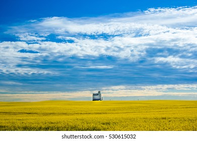 A lonely grain elevator in a canola field