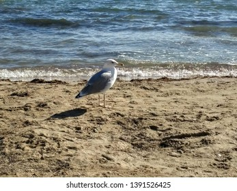 Lonely Gull on a sandy beach in sunny weather.