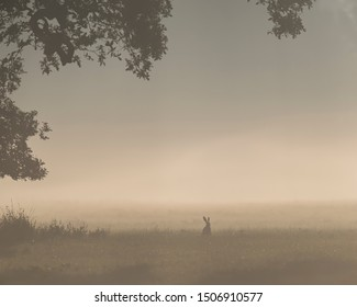 Lonely hare in misty meadow under old tree.
