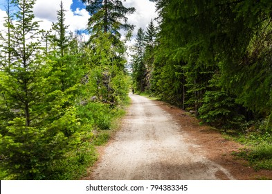 Lonely Hiker on a Gravel Path Through a Forest on a Spring Day. Concept of Loneliness.