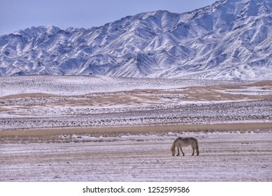 Lonely horse in the snowy Gobi desert