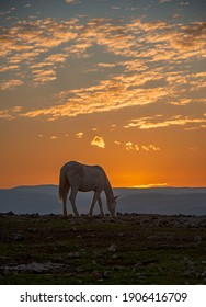 a lonely horse in the sunset