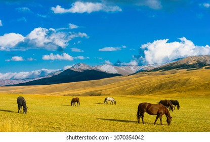 Lonely horses in Kazakhstan steppe, near Almaty city
