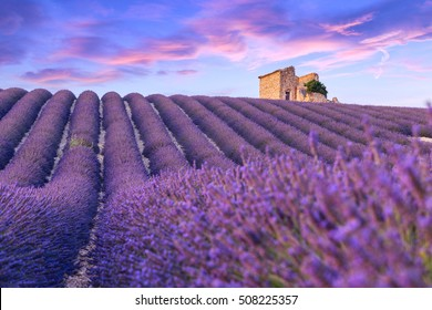 A lonely house standing in a lavender field in Valensole.Provence,France.
