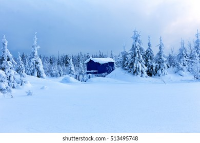 Lonely house in winter forest