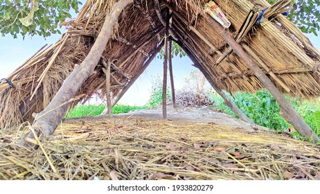 A lonely hut built in a crop field of western India.