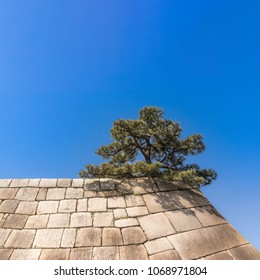Lonely Japanese Pine Tree on the Wall of the Imperial Palace in Tokyo on Clear Blue Sky Background
