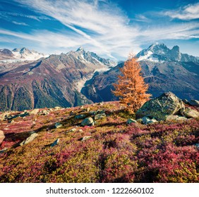 Lonely larch tree on the hill in Vallon de Berard Nature Preserve, France, Europe. Picturesque autumn view of Graian ALps, Chamonix location. Beauty of nature concept background.