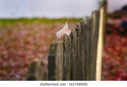 Lonely Leaf on a Wooden Picket Fence
