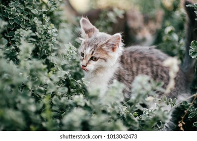 Lonely little kitten hiding in green grass outdoor at nature in summer. Beautiful domestic animal sitting in bushes. Lovely kitty expressive portrait. Wildlife. Mammal pet. Carnivorous predator hunt