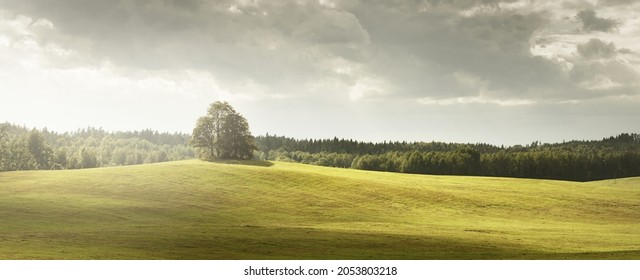Lonely mighty oak tree and the green countryside hill under dramatic storm sky. Sun rays through the clouds. Idyllic rural scene. Dark forest silhouettes. Concept art. Calmness, freedom, peace, heaven