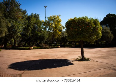 lonely orange tree with its shadow in the park Jnane el Harti in Marrakesh