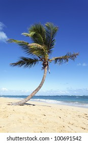 lonely palm tree on caribbean beach in summer