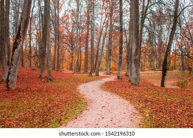 Lonely path through the park full of red and orange fallen autumn leaves, Eleja village, Latvia